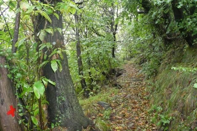 Il sentiero nel bosco.