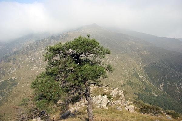 Panorama sul Passo della Gava e il Reixa salendo alla Tardia di Ponente per il versante NO.